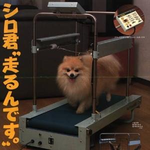 1048392545_dogwalker